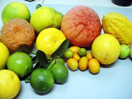 As frutas são alimentos obrigatórios para uma boa alimentação