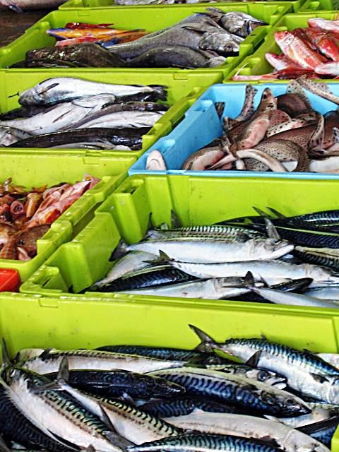Fique atento aos meios de conservação do peixe fresco