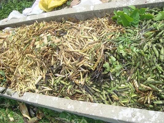 Produção de adubo orgânico