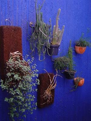 Jardim vertical, com adubos orgânicos