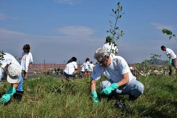 Voluntários se reúnem para plantar mudas em campos abertos