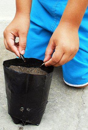 O hábito de plantar e preservar o meio ambiente é tratado como prioridades nas escolas infantis