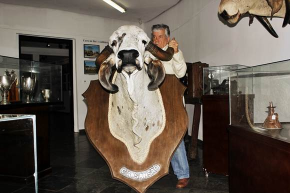 Um dos animais de marcou a história do zebu
