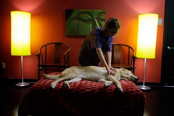 De acordo com o pet-hotel, o dono pode incluir massagens diárias em seus animais