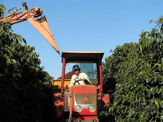 Trator auxiliando na colheita de café
