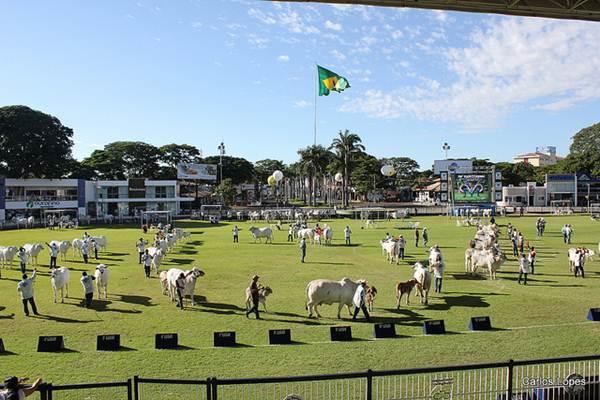 Área de julgamento do gado no Parque Fernando Costa - Foto Flickr @Carlos Ed. Lopes